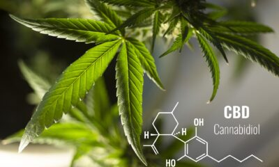 What is CBD, and how can it help your stress levels