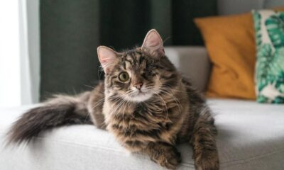 How To Create the Ultimate Cat-friendly Room
